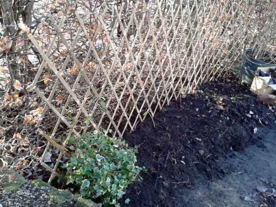 Hedge and trellis