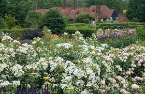 Rose Kew Gardens