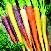 Carrot Rainbow Mixed