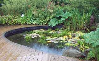 Hedgehog pond at RHS Harlow Carr