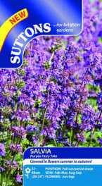 Salvia Purple Fairy Tale