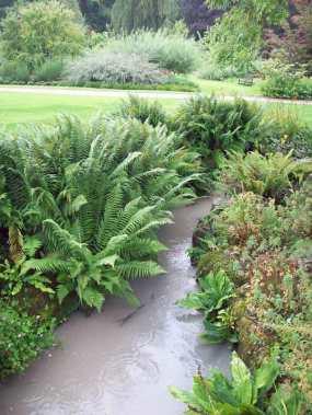 Stream with ferns, RHS Harl
