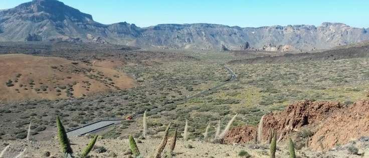 Echiums Tenerife