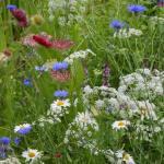 RHS Tatton Park: urban gardening