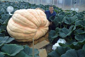 Ian Paton pumpkin