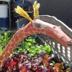 Love this giraffe stick!
