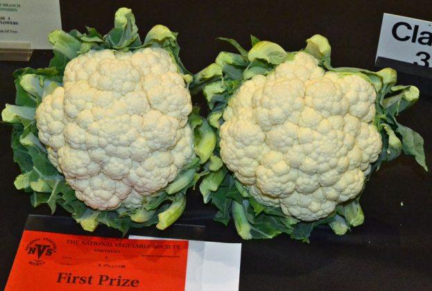 Cauliflower pair 1st
