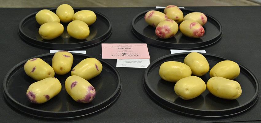 National Potato Championships 1st