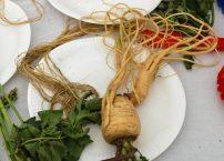 Third... squid-shaped parsnip