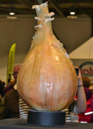 Heaviest onion