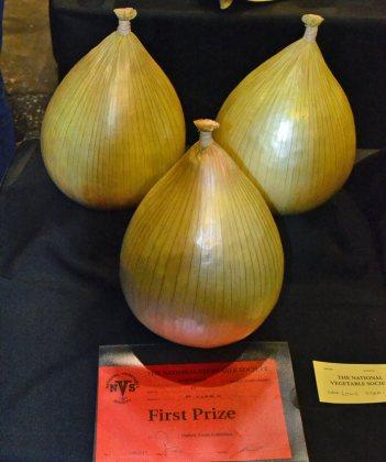 Onion trio 1st