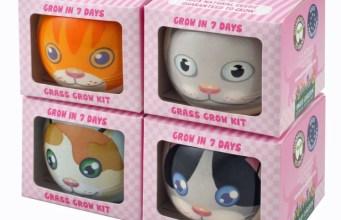 Cat pots. Picture; Mr Fothergill's