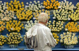 Beekeeper admiring daffodils at RHS Chelsea in 2017. Picture; RHS/Luke MacGregor