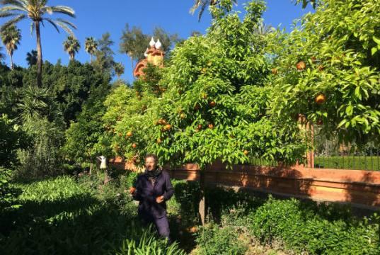Monty Don in Spanish orange grove. Picture; BBC/Blink Films/Alexandra Henderson