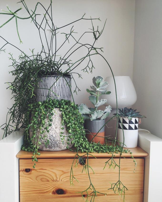 House plants and succulents. Picture; Alice Vincent
