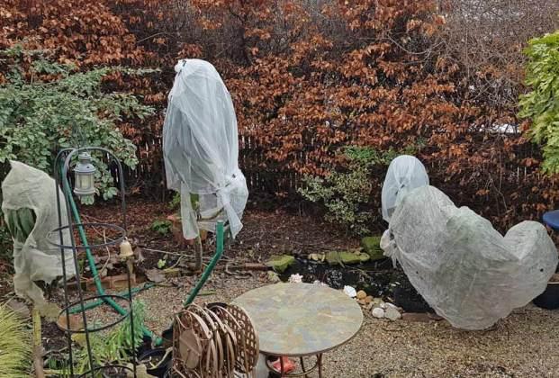 The corpse brides... fleeced Echiums, February 23