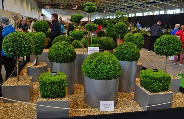 Topiary display