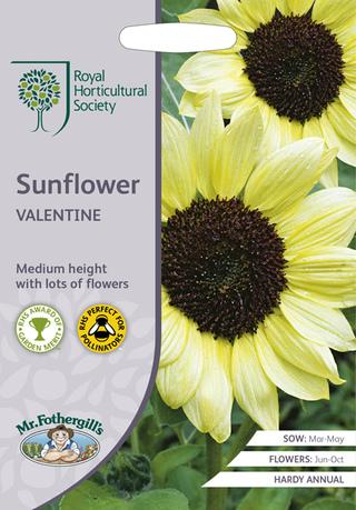 Sunflower Valentine. Picture; Mr Fothergill's