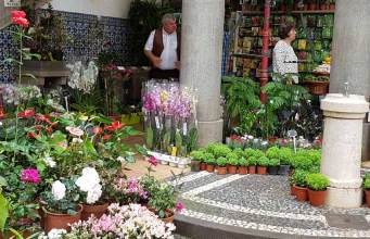 One of the plant stalls, Mercado dos Lavradores, Funchal, Madeira