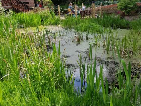 The wildlife pond