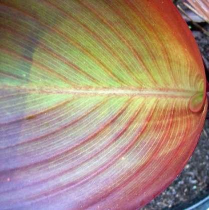 Stunning leaf patterns