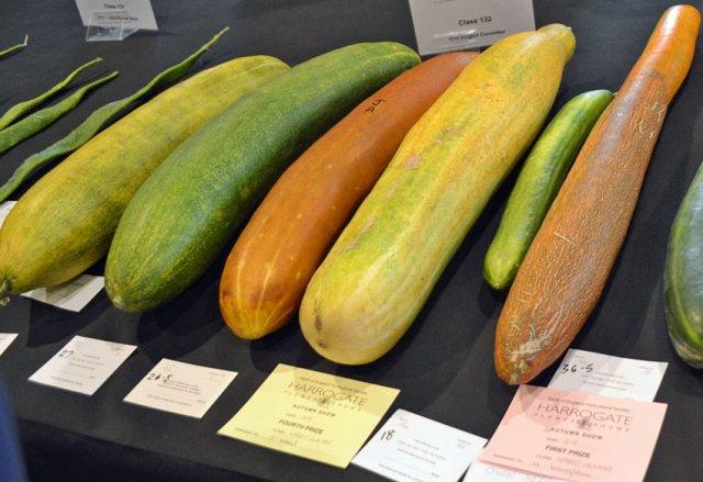 Whopping cucumbers - longest wins!