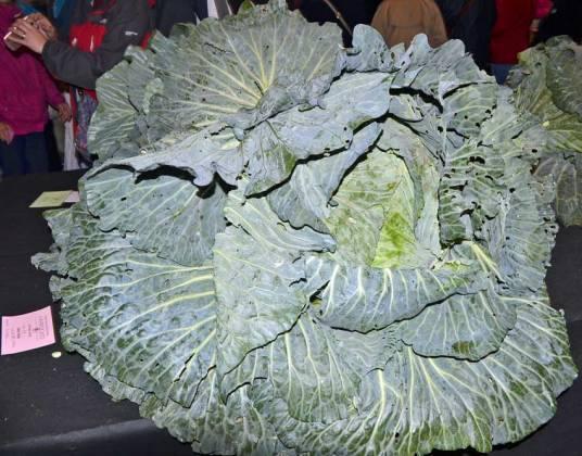 Ian Neale's 32.2kg cabbage