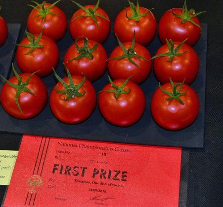 NVS 12 tomatoes winner