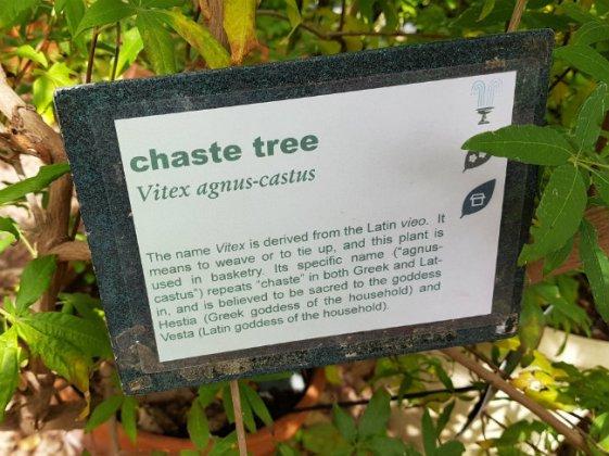 Vitex agnus-castus, the chaste tree