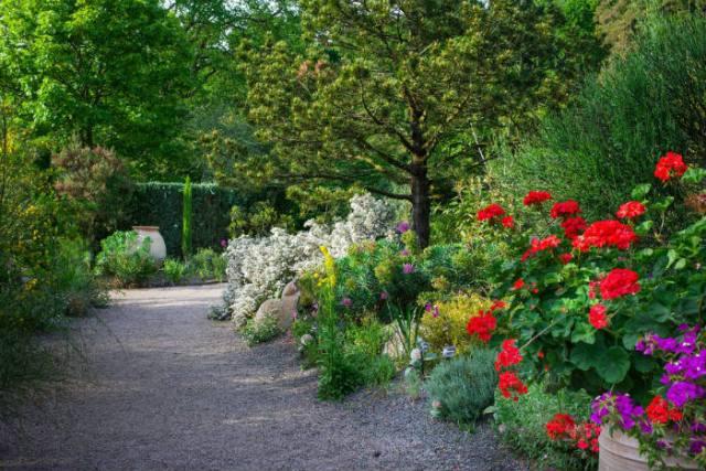 Rosemoor Mediterranean Garden. Picture; RHS/Neil Hepworth
