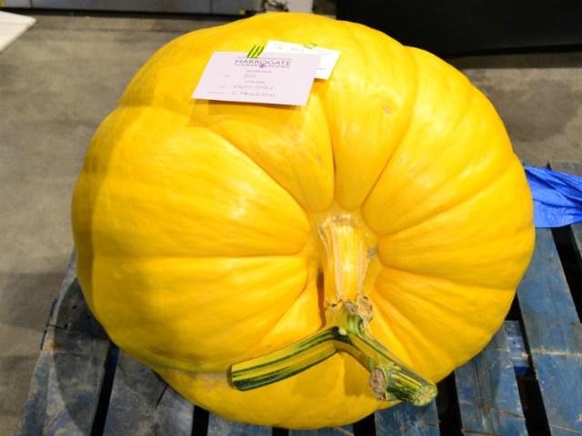 Winning giant pumpkin