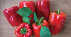 Pepper Popti. Picture; Burpee Europe