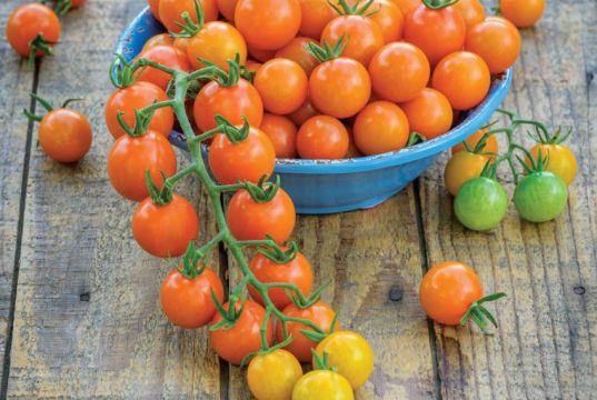 Tomato Honeycomb. Picture; Burpee Europe