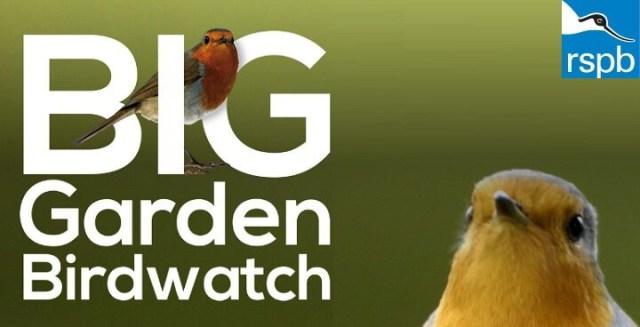 Big Garden Birdwatch 2020 logo