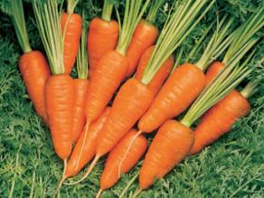 Carrot Short N Sweet. Picture; Burpee Europe