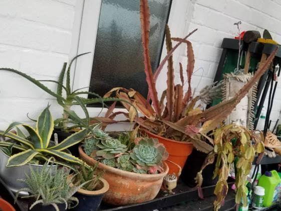 Succulents, February 23