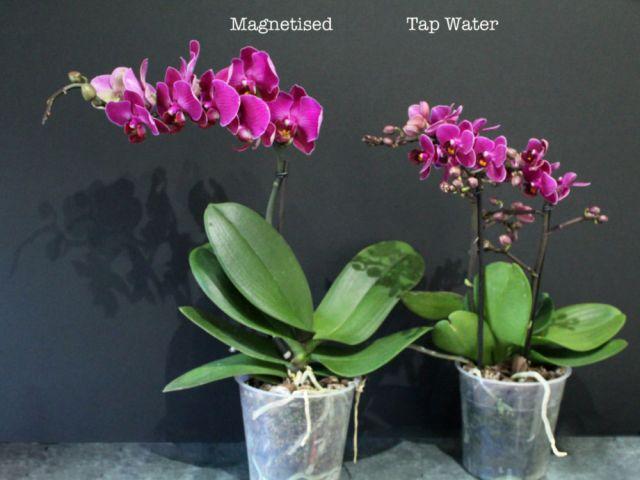 Orchids trial. Picture; PlantSurge