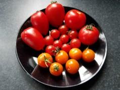 Burpee tomato taste test