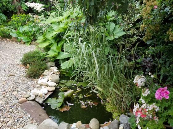 Pond, June 23