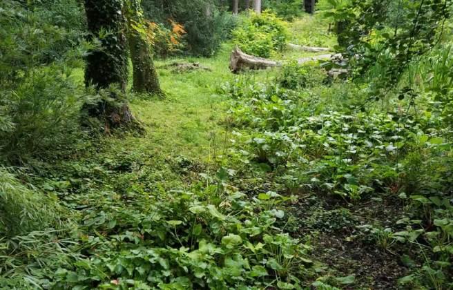 Bog garden view