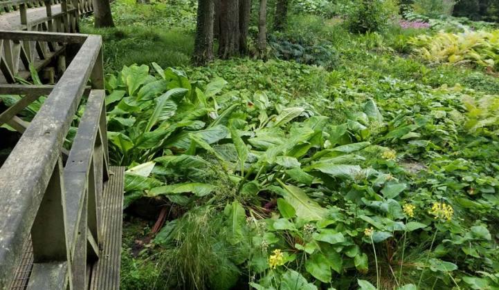 Bog garden walkway