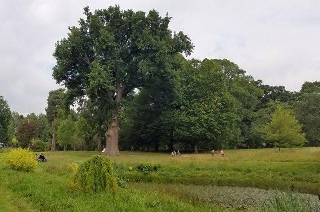 Catherine Parr oak