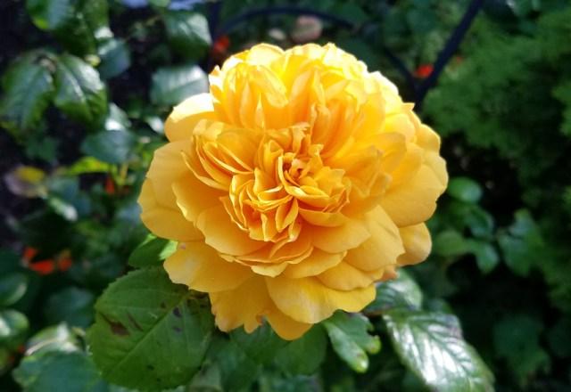 Rose Leah Tutu, Sept 17