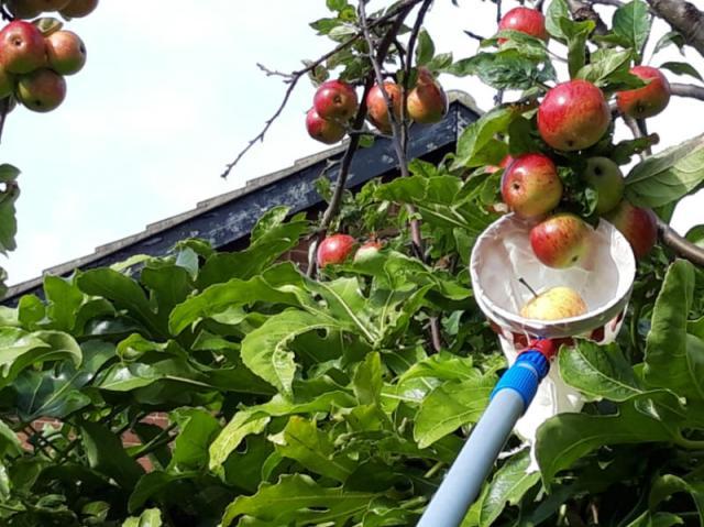 Saving those unreachable apples!