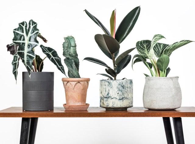 Plant Subscription. Picture; Leaf Envy