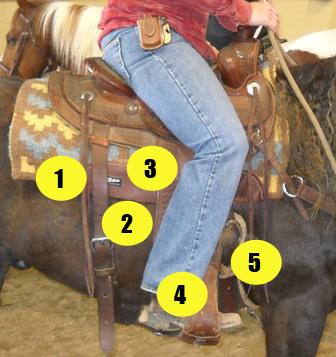 Parts of saddle quiz - Western saddle with rider - Mane-U