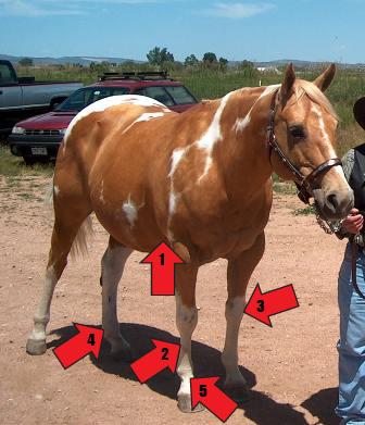 Parts of the horse quiz - horse in halter B - Mane-U