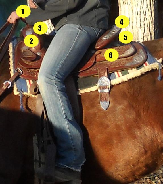 Parts of the saddle quiz - Western saddle with rider - Mane-U