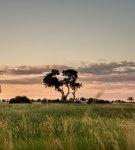 <a class=&quot;amazingslider-posttitle-link&quot; href=&quot;https://www.manekitravel.com/safari-dans-le-delta-de-lokavango-une-experience-hors-du-commun/&quot; target=&quot;_self&quot;>Safari dans le delta de l&#39;Okavango : une expérience hors du commun</a>