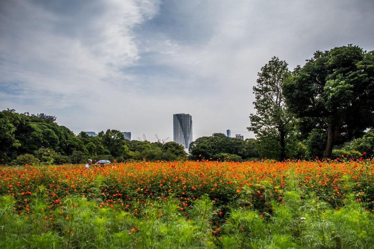<a class=&quot;amazingslider-posttitle-link&quot; href=&quot;https://www.manekitravel.com/reportage-photo-japon/&quot; target=&quot;_self&quot;>[Reportage photo] Japon</a>